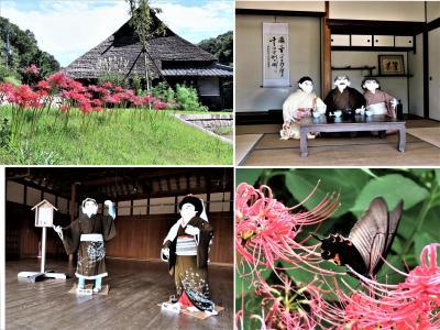 """2021年9月、神戸市北区藍那に位置する """"あいな里山公園""""に彼岸花をはじめとする秋の花々、そしていにしえの里山の人々の暮らしを観ます!"""