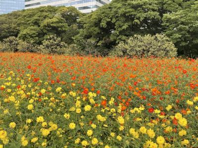 花を探して 浜離宮恩賜公園