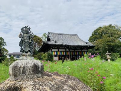 秋の奈良 コスモス寺&カフェ巡りと大仏プリン(╹◡╹)
