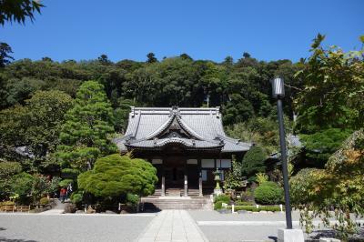 踊り子号に乗って伊豆マリオットホテル修善寺へ