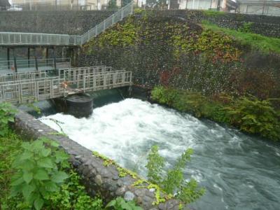 台風の中、風雨をものともせず、羽村市の玉川上水の取水堰地区に行ってきました。