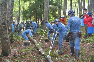 三大火祭り、野沢温泉で新年用の御神木伐り出し