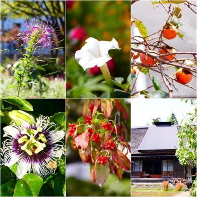 秋の多摩丘陵を歩く ー 町田の谷戸をぐるりと回って