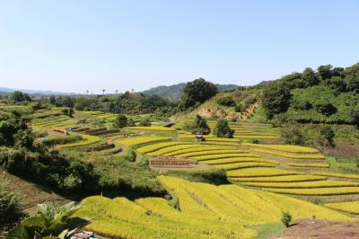 城跡の斜面に広がる棚田 千早赤阪村ならではの美しさ!