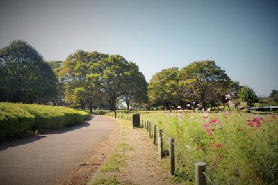 東京・小金井公園のちょこっと歩き