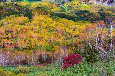 秋色のパレット「栂池自然園」へ弾丸撮影行
