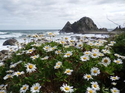 南部・八戸 JALどこかマイルde鮫・蕪島から種差海岸遊覧ぶらぶら歩き旅ー2