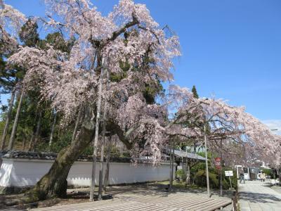 筍買いに京都まで 筍までは遠かった。今日はゲットできるかな?