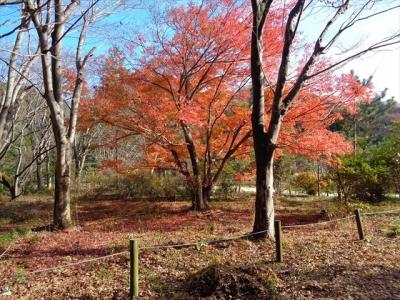 秋も深まる白水阿弥陀堂・塩屋崎灯台・鮫川渓谷