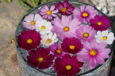 20211008-1 奈良 コスモス寺、般若寺は五分咲きだそうですけれど、今日くらいしか来られへんかなと