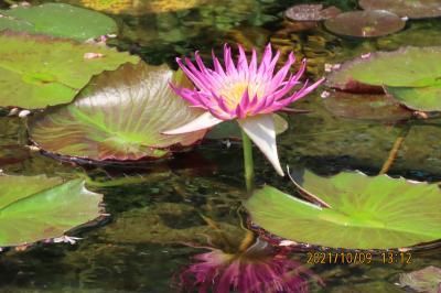 池袋西武百貨店9階にある「食と緑の空中庭園」を久しぶりに訪問①睡蓮の庭