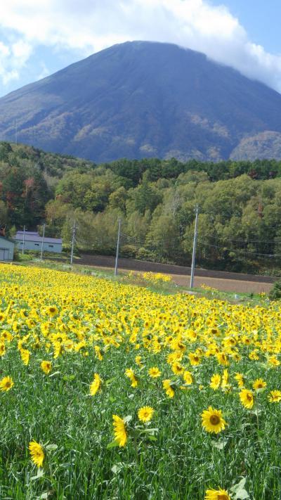 北海道サイクル 羊蹄山一周