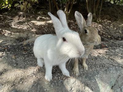 ウサギに会いに、大久野島にいってみた(^^♪
