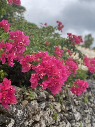 2021年 るなさんと行く梅雨明け前の石垣島&竹富島のんびり旅【4】石垣島朝散歩と珊瑚に囲まれた竹富島散策