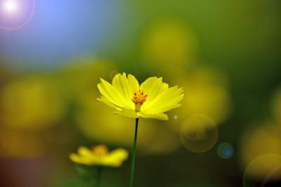 秋の花だより・「ぎふワールド・ローズガーデン」として前日に❗️他三ヶ所へ