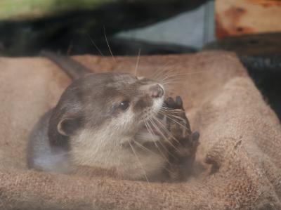 大誤算!よもや、よもやの下田海中水族館@車で行く、箱根下田旅