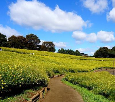 秋の公園散策と食を楽しむー昭和記念公園&昭和の森車屋