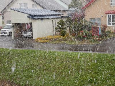 初雪だより