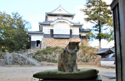 備中松山城猫城主三十郎に初御目見得