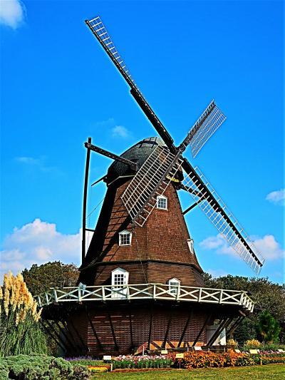ふなばしアンデルセン公園-1 デンマーク-風車 メルヘンの丘Zone ☆パンパスグラス-見ごろ