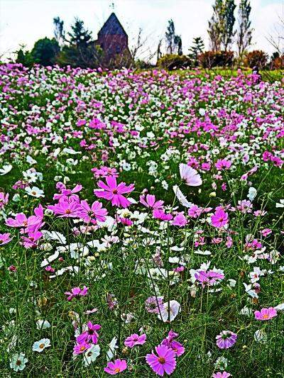 ふなばしアンデルセン公園-2 コスモスまつり 花めいろ ☆花の城Zone~自然体験Zoneへ