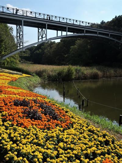 ふなばしアンデルセン公園-3 太陽の橋~ワンパク王国Zone ☆球根ベゴニアなど-花ざかり