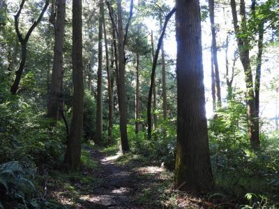 横浜で森林浴を楽しめる森を散策
