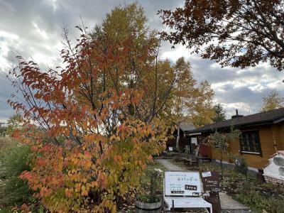 秋の北海道。層雲峡から士幌~富良野~美瑛とぐるっと道央一周ドライブ。