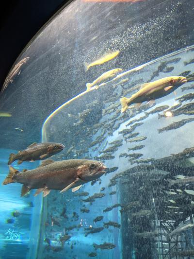 石和温泉の翌日は忍野八海~淡水魚の水族館~大涌谷