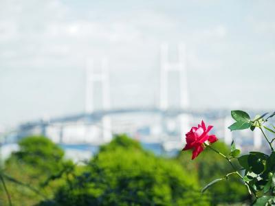 横浜さんぽ23☆秋バラ&パティスリーパブロフ