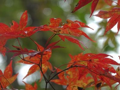 [2021年10月]道央の温泉・グルメ・紅葉の旅 3/3 ピリカレラホテル編