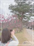 冬の沖縄旅☆北部で桜とステキなプチホテルステイ�〜森cafeハコニワと寒緋桜〜の写真