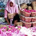 Indonesia ワヤン(影絵芝居)をもとめて 中部ジャワの旅(7) ジョクジャカルタの街あるき