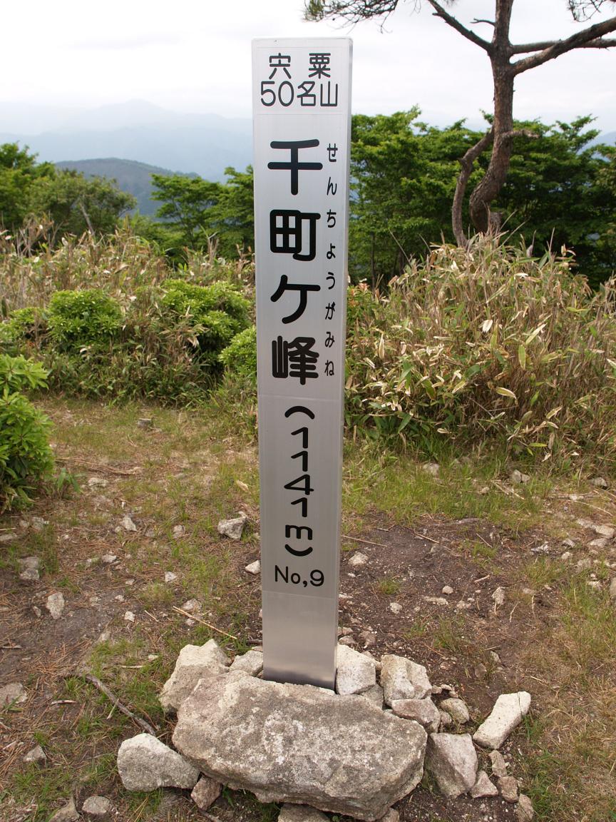 登山道を無視して登った千町ヶ峰 ふるさと兵庫50山