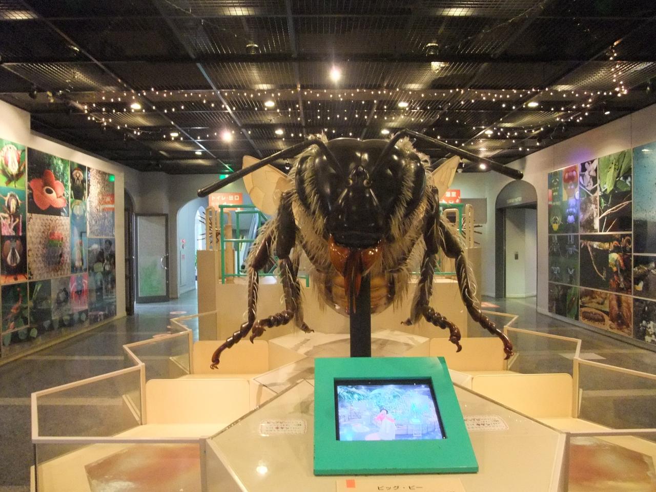 『元旦もやってます伊丹市昆虫館』伊丹(兵庫県)の旅行記 ...