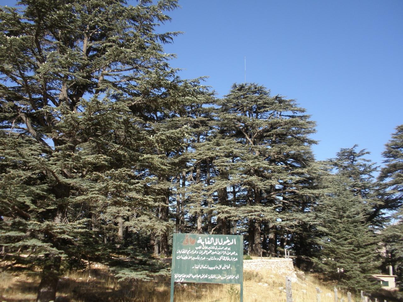 中東のパリ」レバノン8日間(3日目)レバノン杉の森~ビブロス