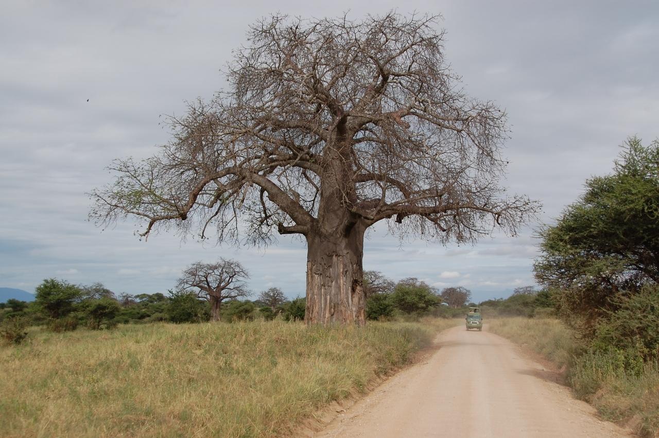 ケニア 観光