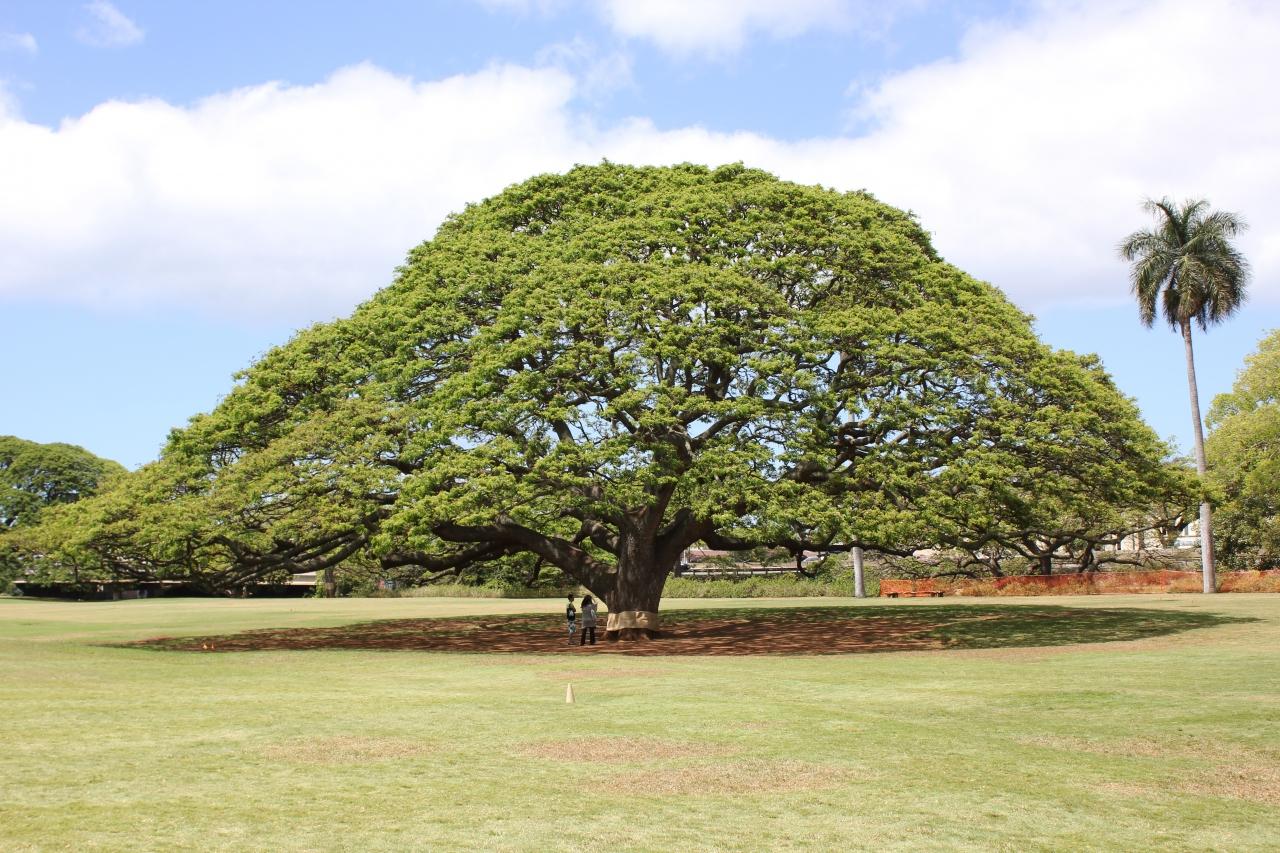 ハワイ島 オアフ島 思い出の一枚...