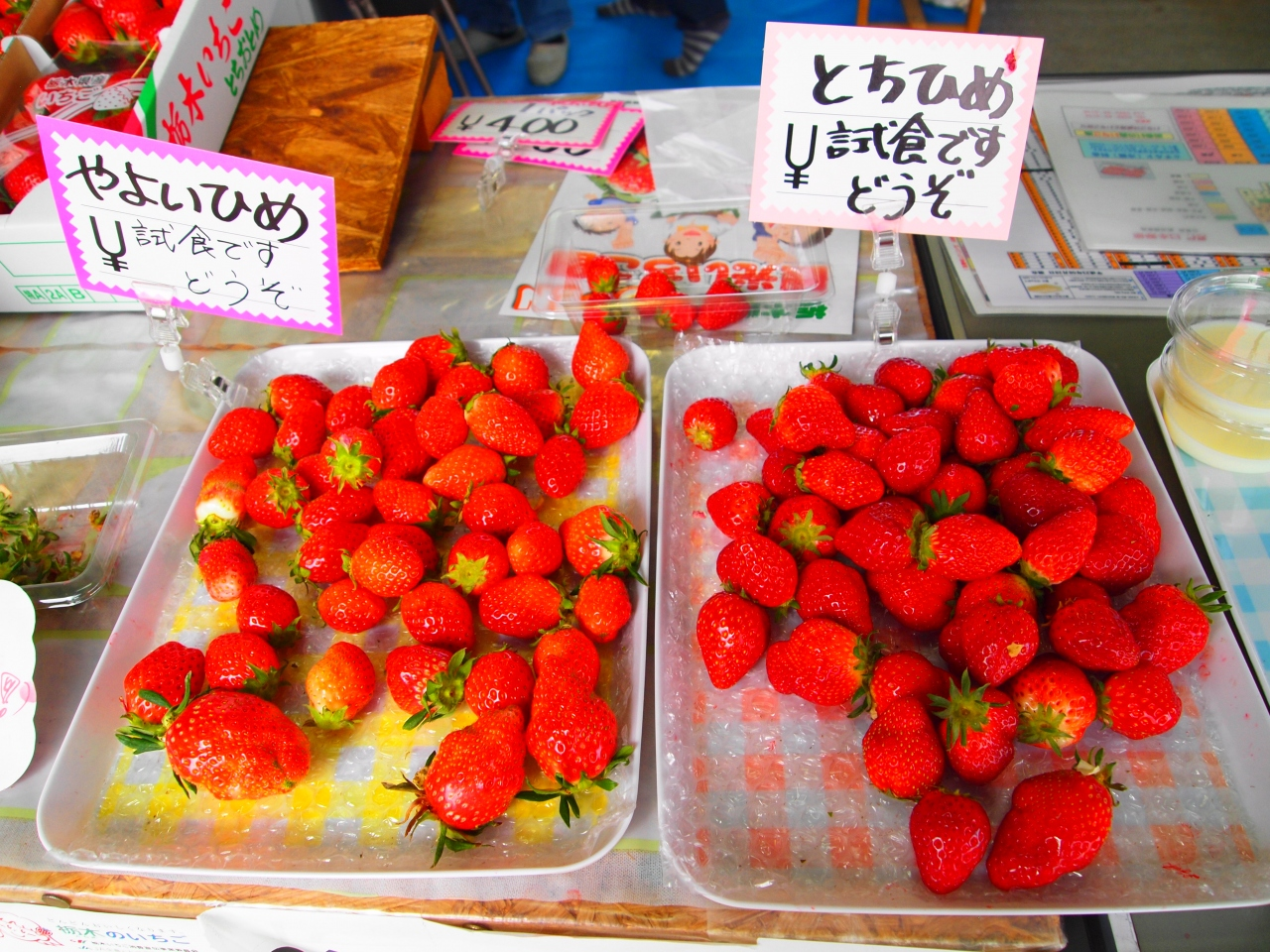 栃木 県 イチゴ 狩り