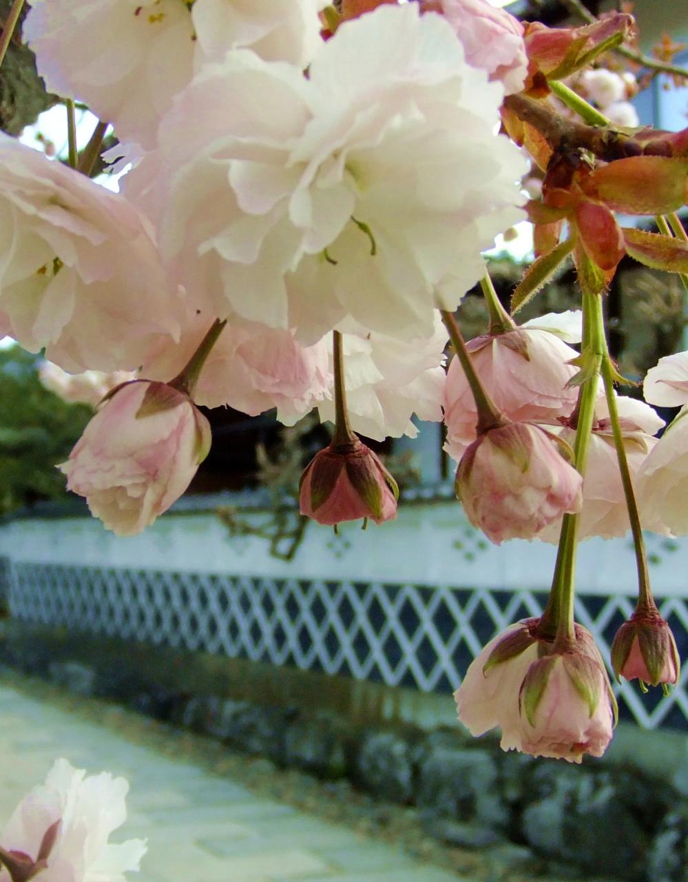 北信州の遅い春を満喫 小布施・須坂日帰り旅行