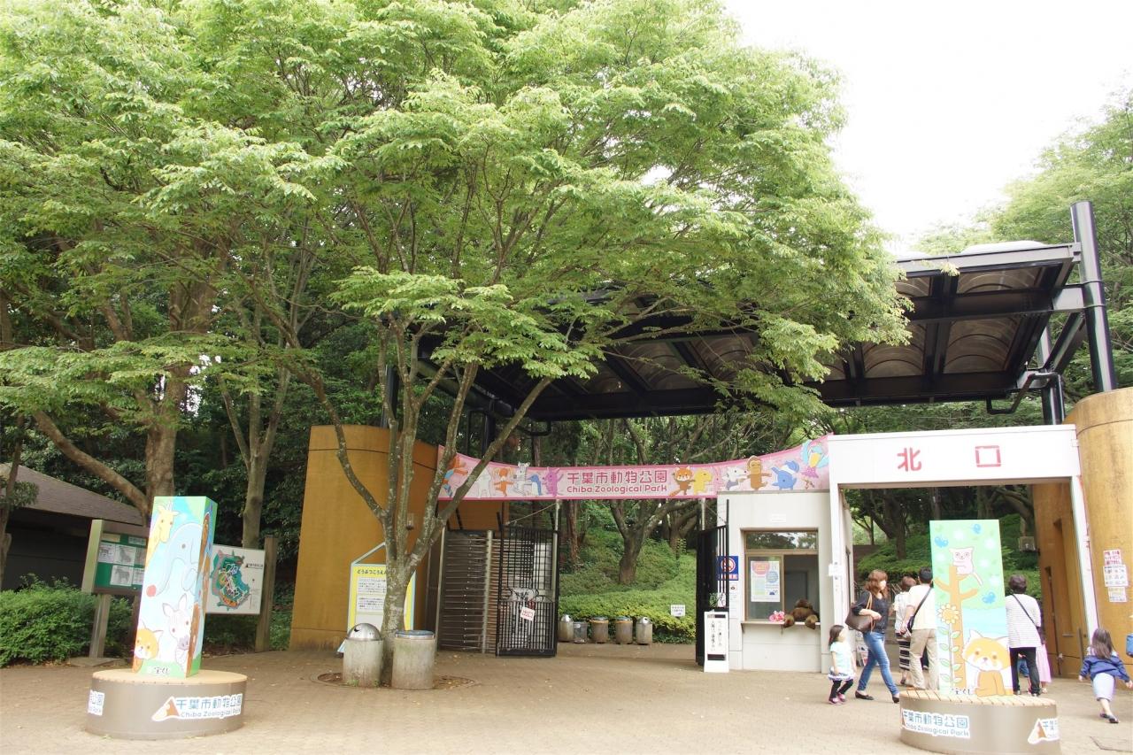 市 動物 公園 千葉