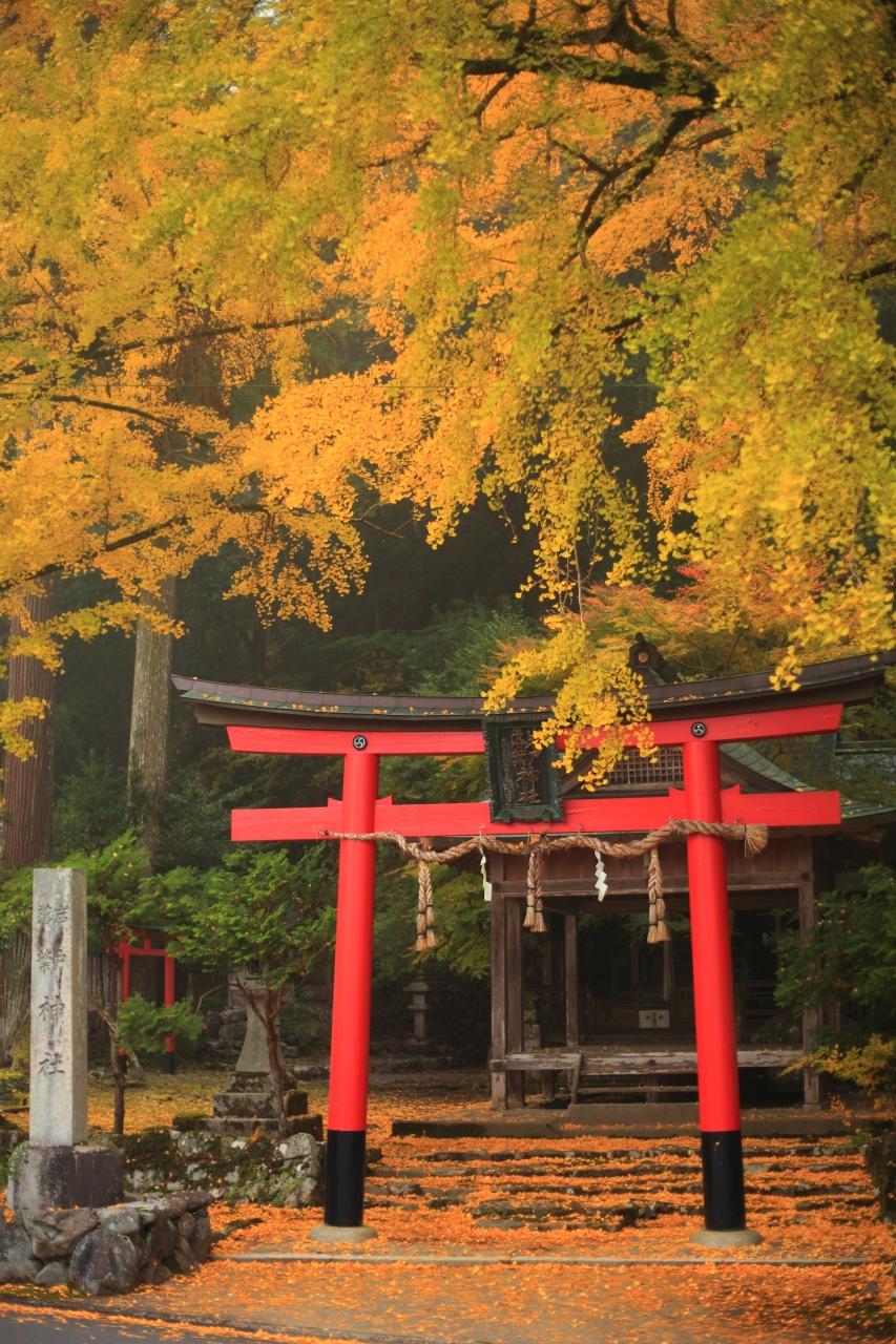 京都 紅葉めぐり~岩戸落葉神社...
