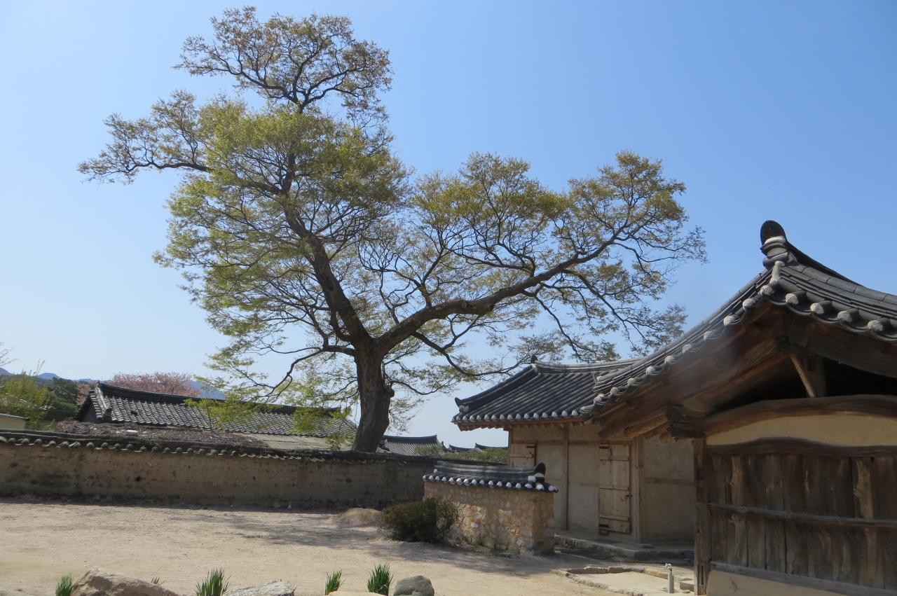 2013春、韓国旅行記26(11):4月9日(9):慶州、校洞村、崔氏古宅、東京犬、レンガ造りの煙突、庭の甕