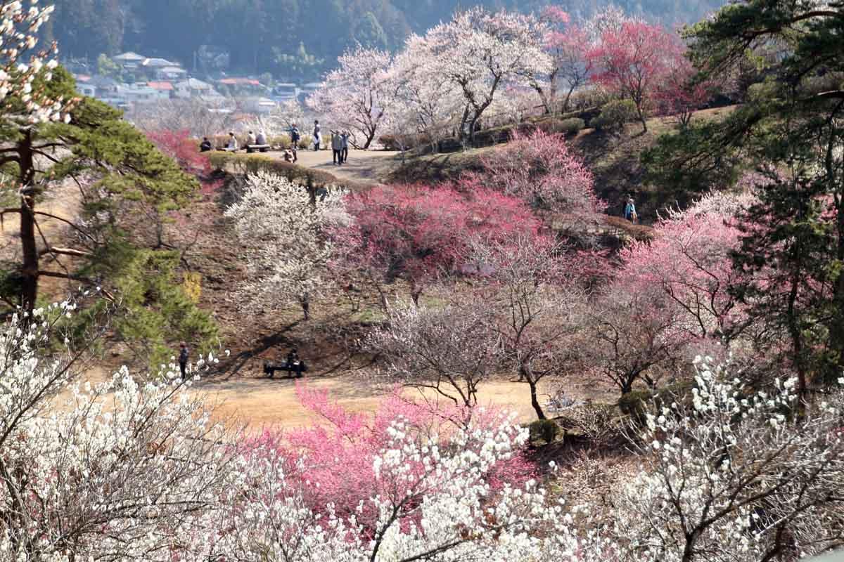 日本一にも選ばれた美しい景色・...