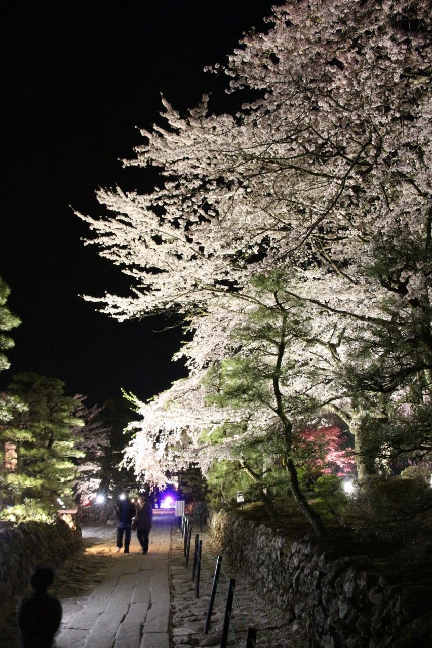 「春宵一刻値千金」 信州駒ヶ根光前寺のしだれ桜