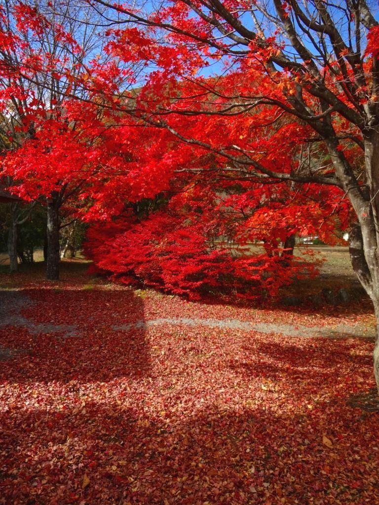 眩しすぎる紅葉に彷徨すればーーー富士五湖の秋