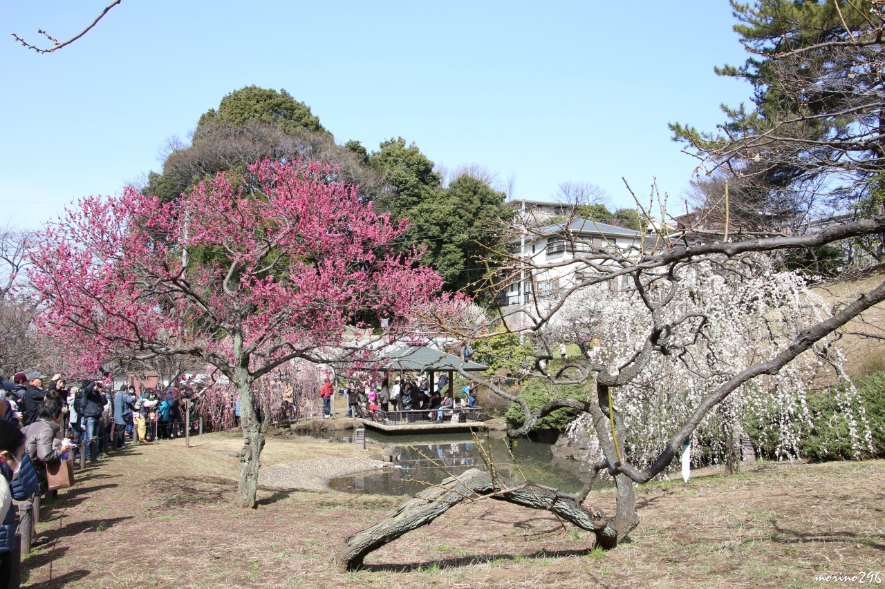 「大倉山公園 春」の画像検索結果
