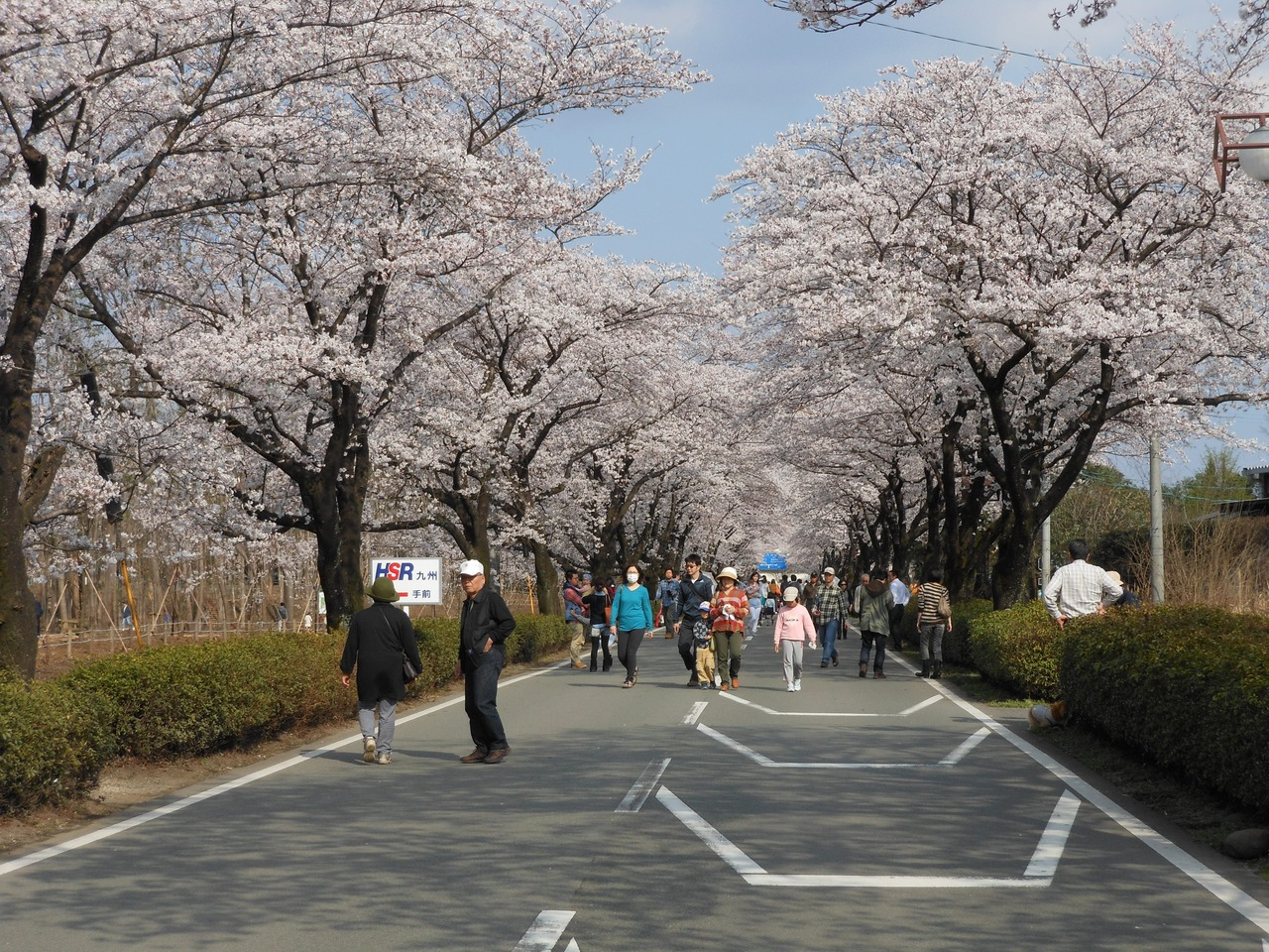 「阿蘇内牧温泉街 桜」の画像検索結果