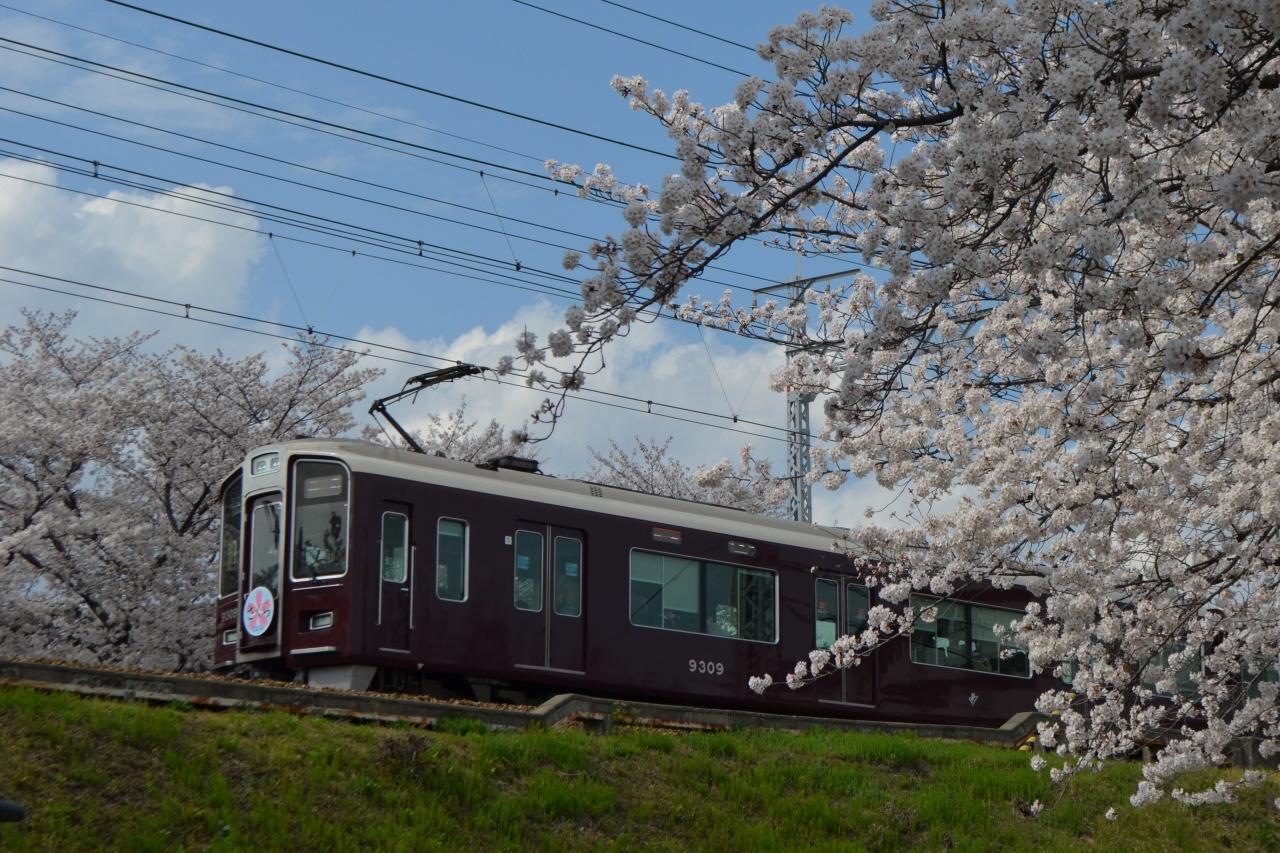 2014年桜 ~茨木桜通り~』茨木・摂津(大阪)の旅行記・ブログ by めぇ ...