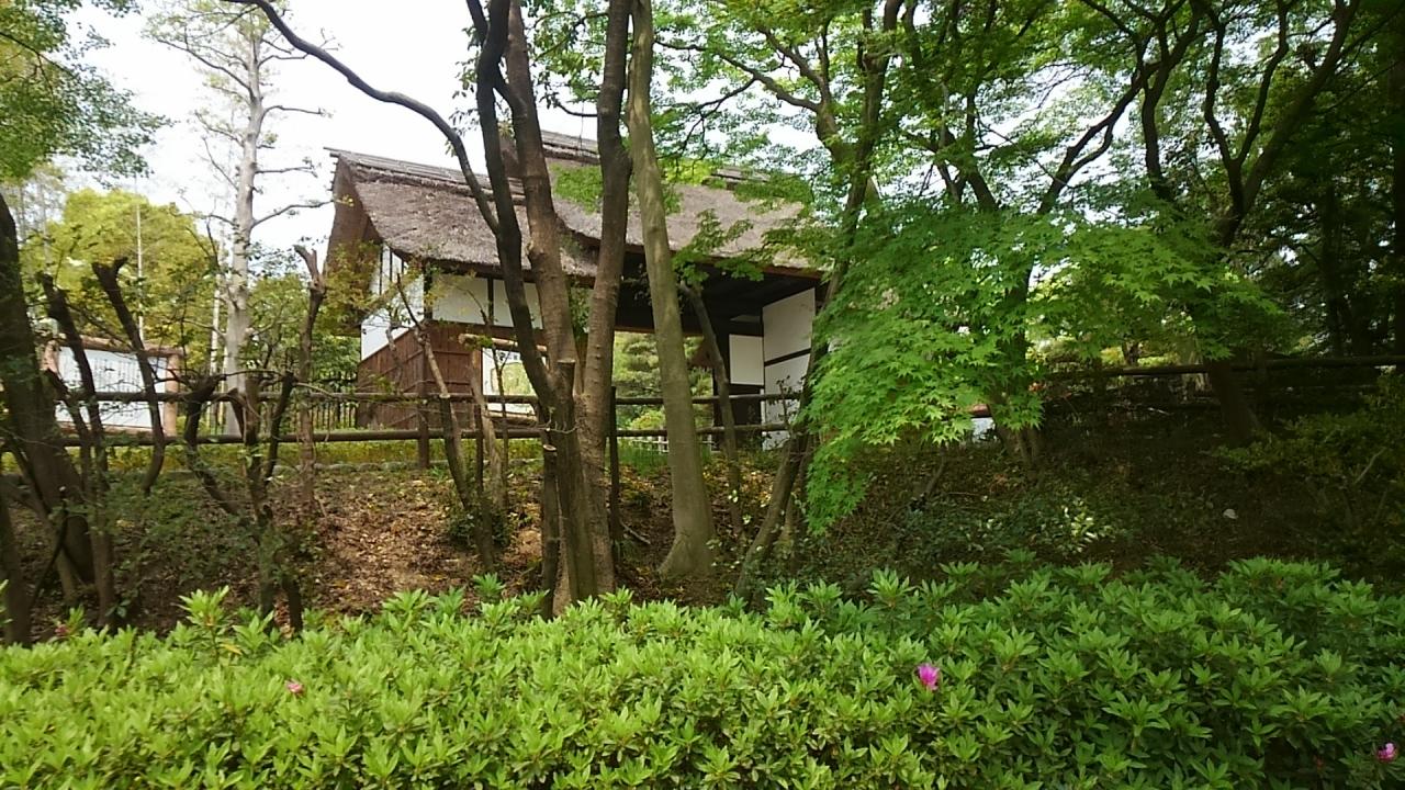 『大府市の大倉公園のツツジはもう少しで満開です。』豊明 ...